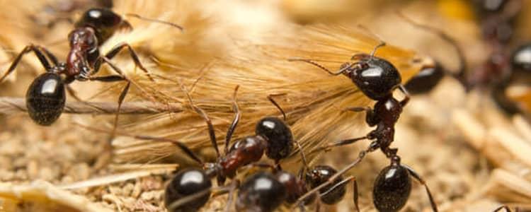Ant Control Bonython