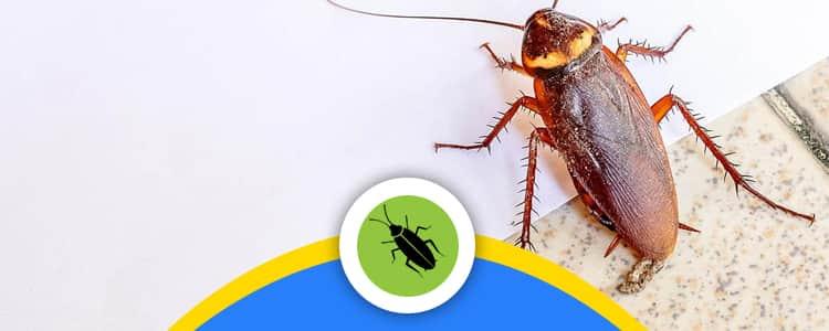 Cockroach Control Bonython, ACT