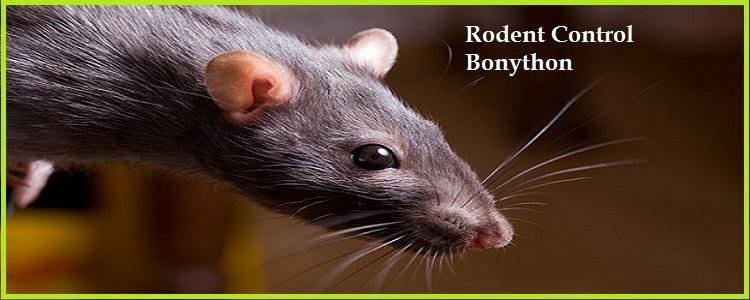 Rodent Control Bonython, ACT