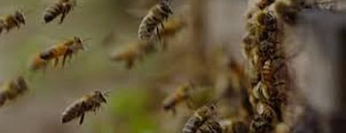 Bees And Wasp Control Bonython