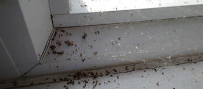 Spider Control Bonython